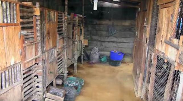 菲律宾一工厂散发阵阵臭味,知情人称是上流社会最佳美食