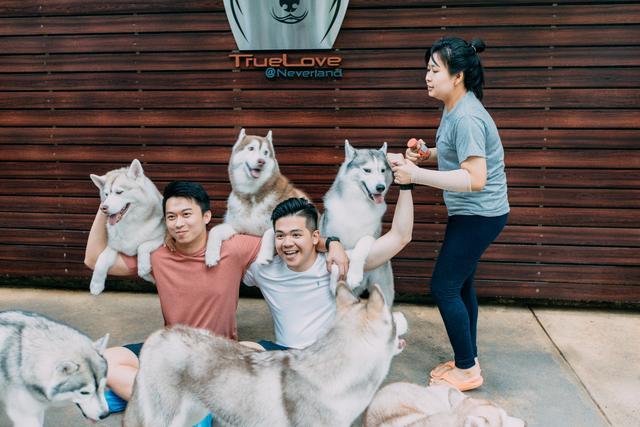 夜夜撸改成夜夜射影院_曼谷旅行:泰国这家狗咖有三十多只哈士奇,保证让你撸狗撸到爽