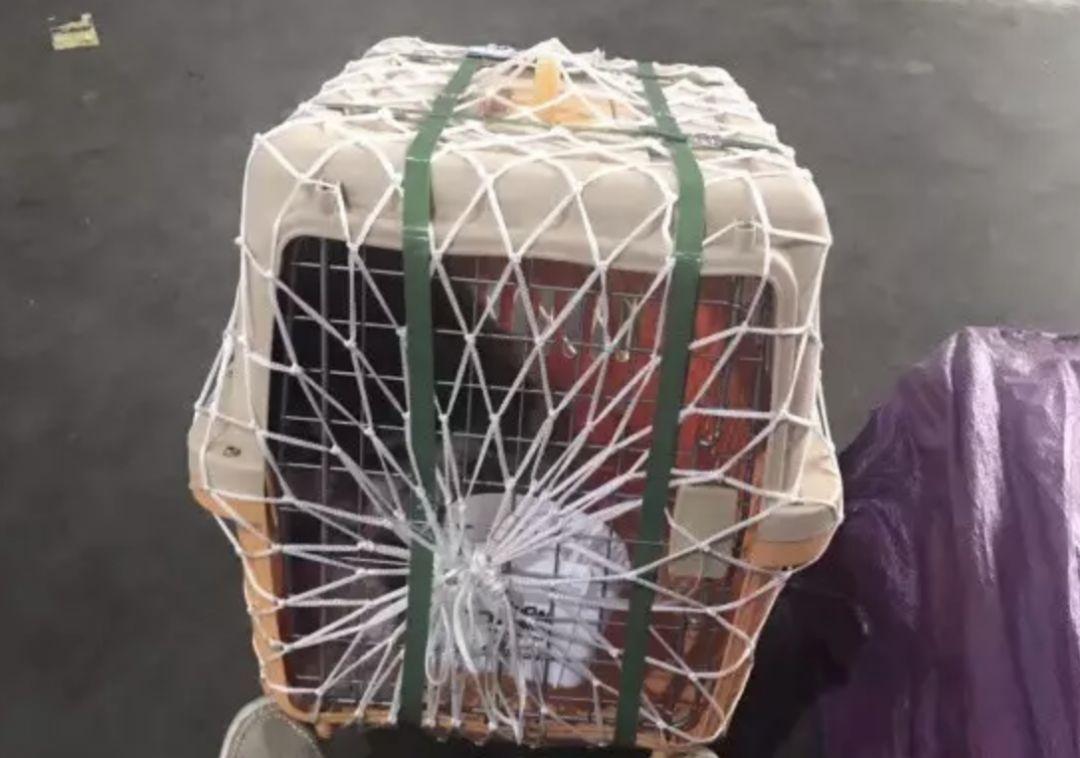 青岛宠物航空箱