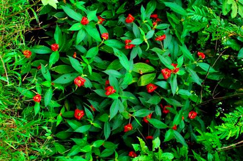 """印度丛林出现长满少女""""双唇""""的植物,当地僧人警告不要轻易触碰"""