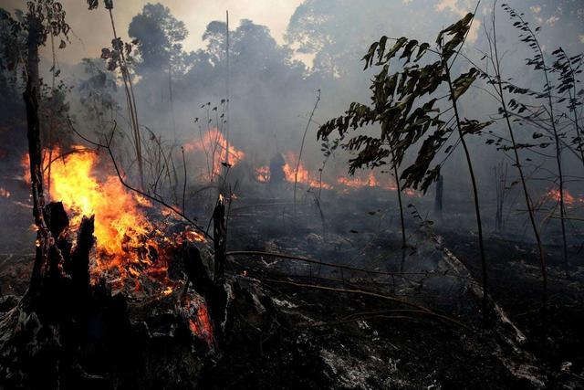当亚马孙燃起大火,没有物种能独善其身