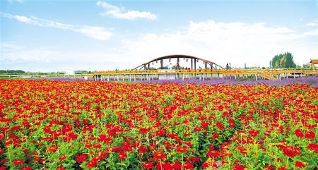<b>游客在酒泉市肃州区银达镇佘新村花卉基地赏花</b>