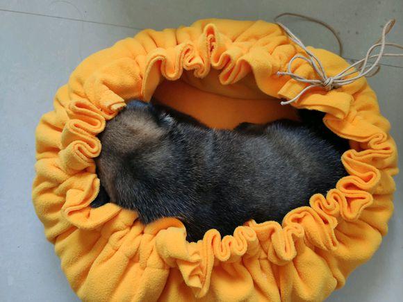 网友给小狗弄了个睡袋,这样睡觉就不会冷了,可它总睡出来