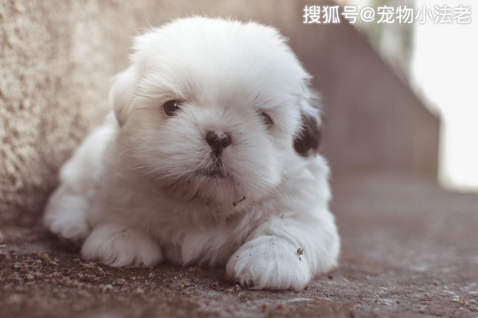小狗简笔画彩色