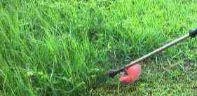 4岁女童被割草机割穿腹部 家人淡定塞回肠子用缝衣针缝合