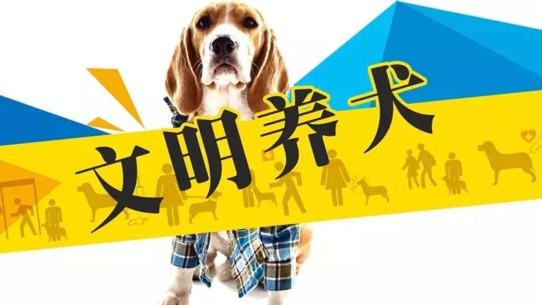 萍乡教程养犬多远,还有之路?锁线订文明图片