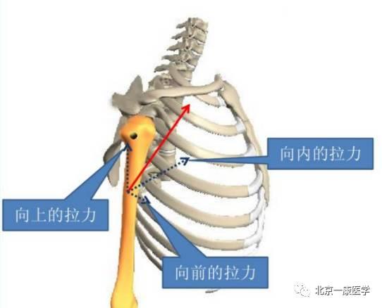 关节运动的杠杆原理_骨折的外固定