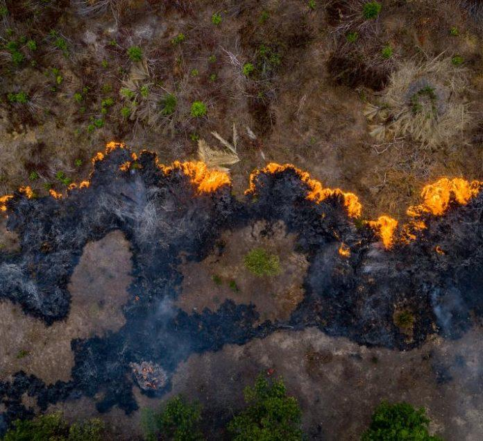 菲律宾地产,关于亚马逊热带雨林的思虑!