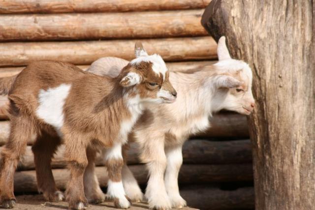 9个多数人不相信的动物事实,其实是真的