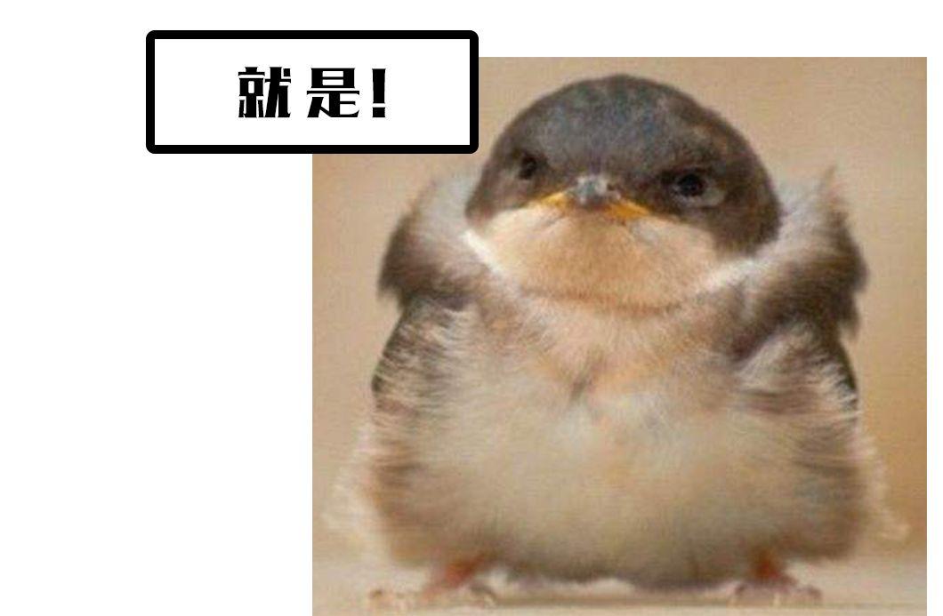 """南京中山陵发现""""愤怒小鸟"""""""