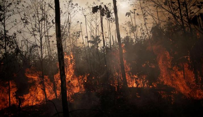 科学家:亚马逊大火对氧气供应影响不大,莫危言耸听
