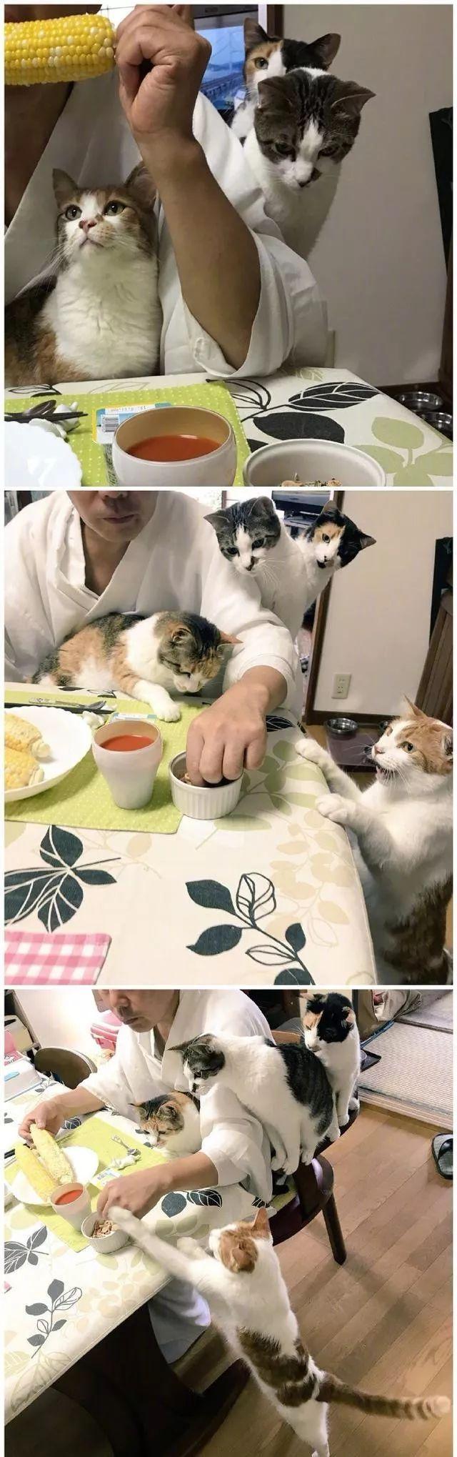 看到丝袜就想撸_日本一寺院收养四只猫以后,住持就每天沉迷撸猫!
