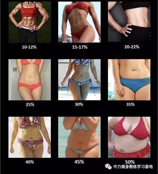 22 率 体 女性 脂肪