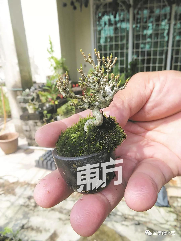 形成缠线的植物,随著补丁成长时保留曲线美外,也捆绑植物小苗.原貌情趣内衣女友真实图片