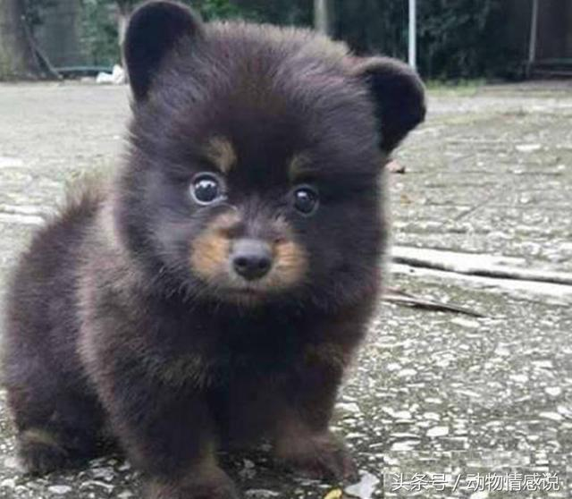 网投被黑还能从出款吗_原创 你是假装成熊的狗,还是假装成狗的熊呢?