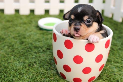 双语阅读:一人一狗,每个生命都值得被温柔以待
