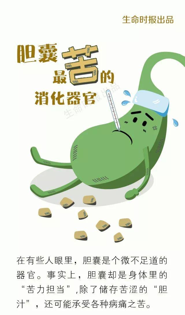 【图解】胆囊,人体最「苦」的消化器官!