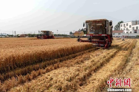 """(新中国70年)科技为山东农业发展装上""""强劲引擎"""""""