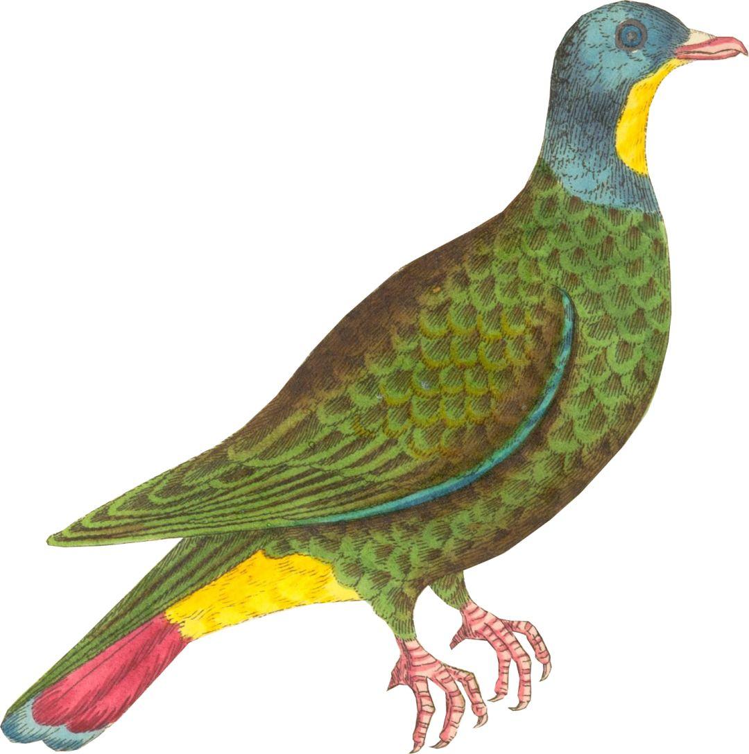 壁纸 动物 鸡 鸟 鹦鹉 1080_1087图片