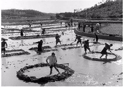 中國如何以不到世界9%的耕地,養育了世界近五分之一的人口   禮贊70年
