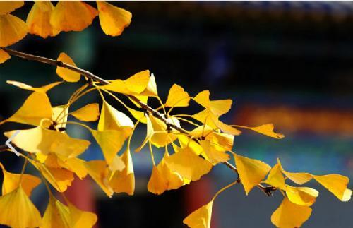 秋季吃南瓜正当时:防秋燥、护血管,连南瓜子和南瓜皮也是好东西
