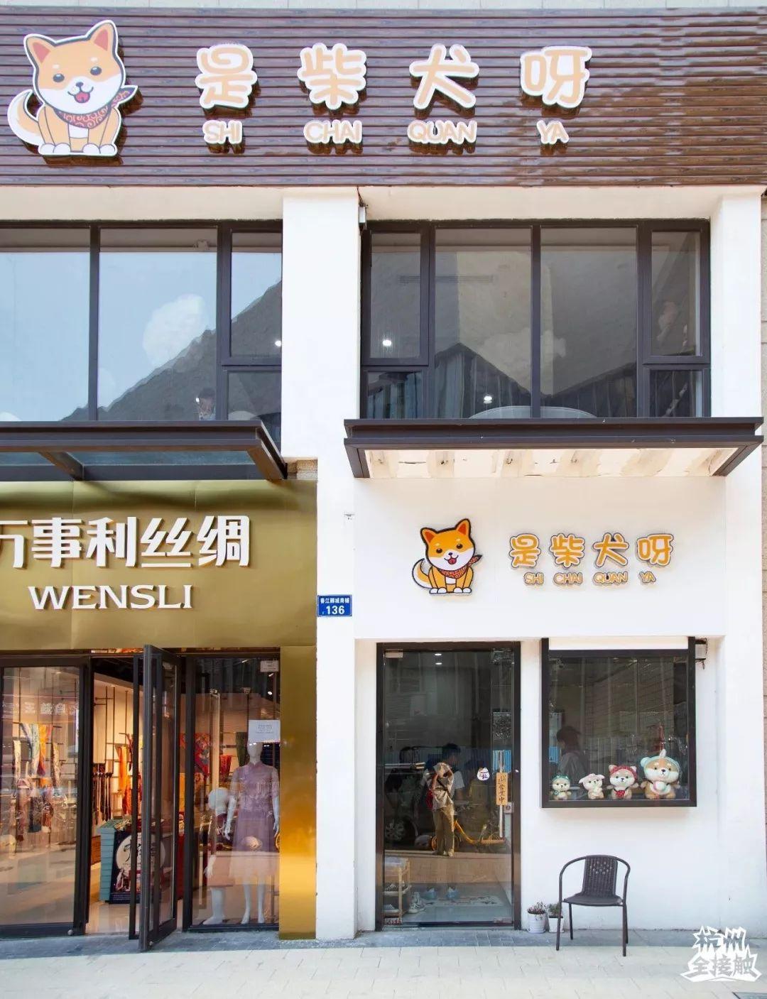 火遍杭州的「柴犬咖啡厅」来日本啦,8只柴犬1只柯基撸高中!素材到爽人物作文图片