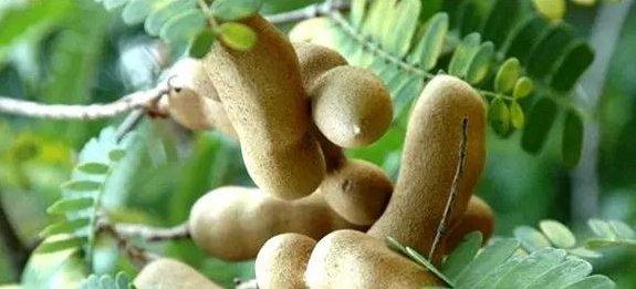 去云南旅游,遇到这4种水果别错过,好吃不贵