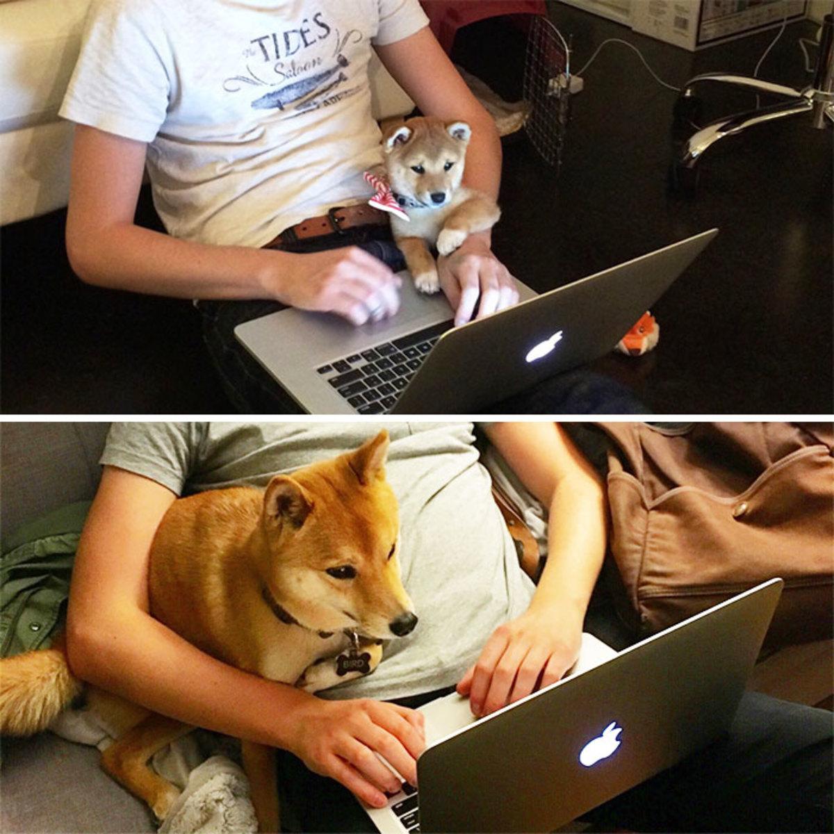 """一组图片直击宠物犬10年的变化,从呆萌可爱到""""老油条"""""""