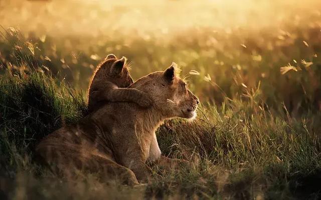 一次旅行,六个国度,告诉你非洲野奢和游猎的正确打开方式