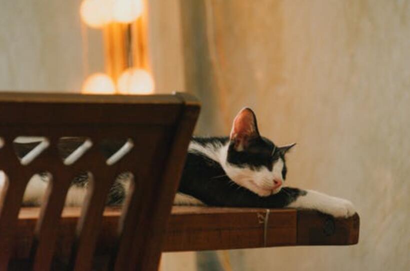 """原来""""躲猫猫""""是皇家游戏"""