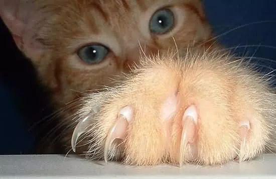 如何训练猫咪不抓人不咬人图片