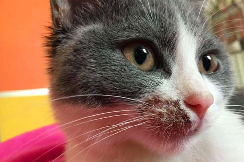 【奇妙の猫咪物语】猫癣结痂地方用酒精还是碘伏,猫癣用碘伏还是酒精