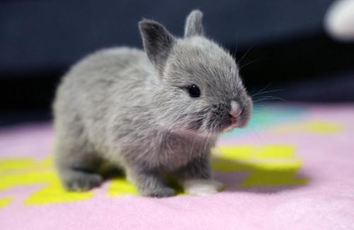 【兔兔の饲养经验】兔子从几个月吐毛,迷你兔多大吐毛