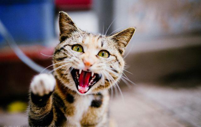 猫咪咬人抓人怎么办图片