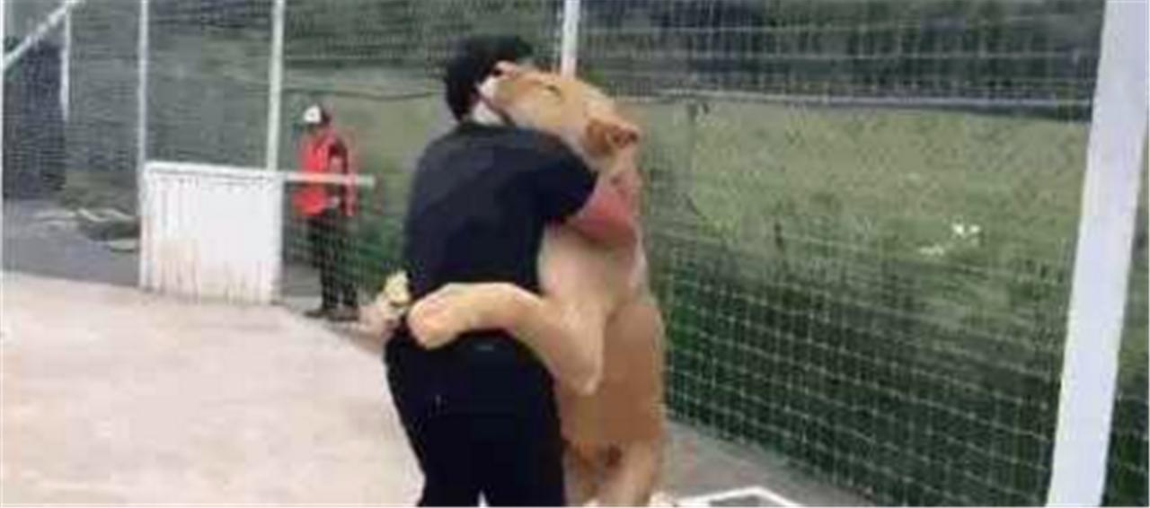 10年后狮子再见人类爸爸,瞬间泪崩,上去就是一熊抱