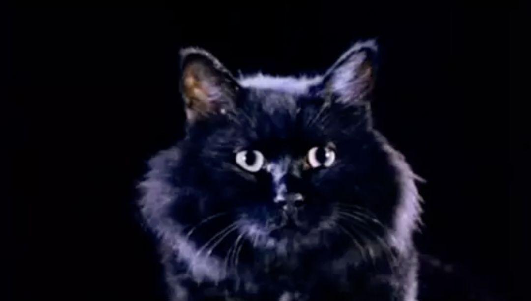 卫斯理之老猫