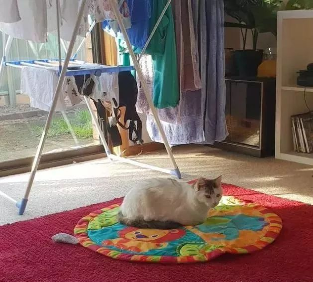 猫咪为了报恩,一心一意帮忙照顾孩子,只为了自己最爱的铲屎官