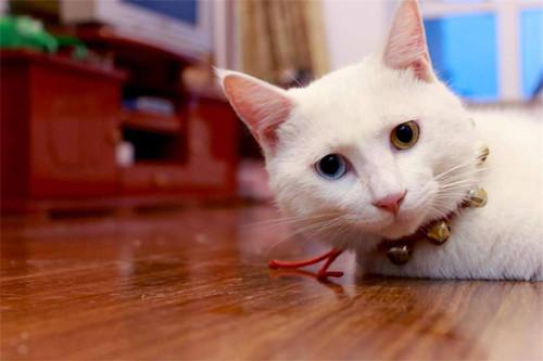 【奇妙の猫咪物语】猫咪不撒尿一直睡觉,猫咪老是不撒尿爱睡