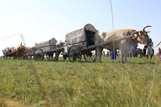 """中国农民丰收节· 首届乌珠穆沁马业协会""""丰收节""""那达慕举办"""