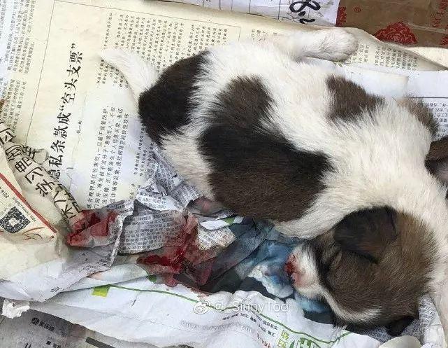 刚出生的小狗竟被打到吐血,网友:可以不爱  不要伤害!