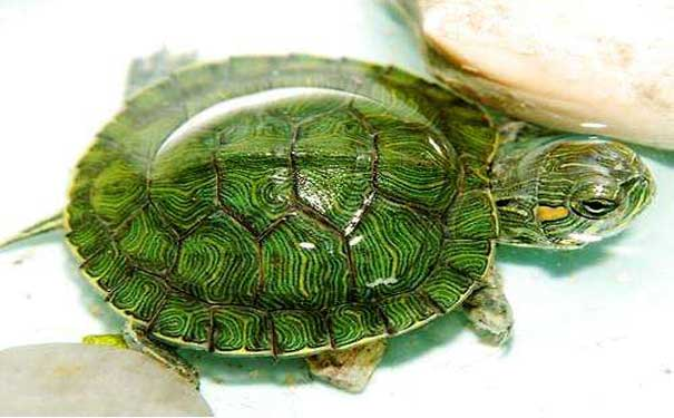 乌龟缸设计图最合理