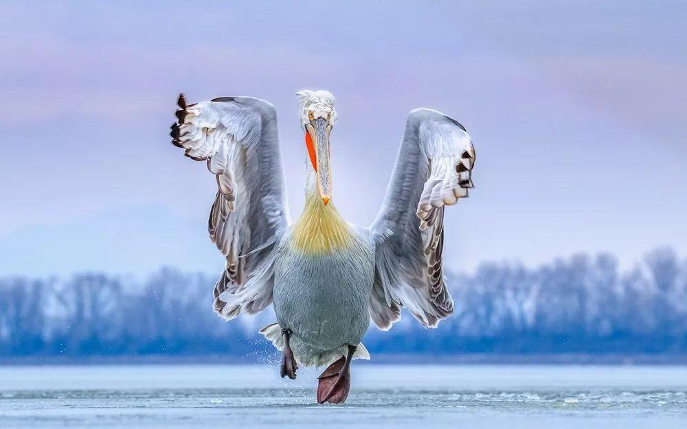 美到极致!2019年度鸟类摄影师大赛获奖作品赏!