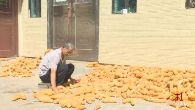 广南:辉煌70年 粮食丰收人民富足