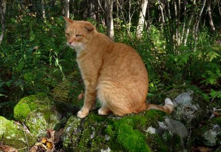 """猫咪这4种""""坐姿"""",不只是随便坐着,而是各有含义,你都懂吗?"""