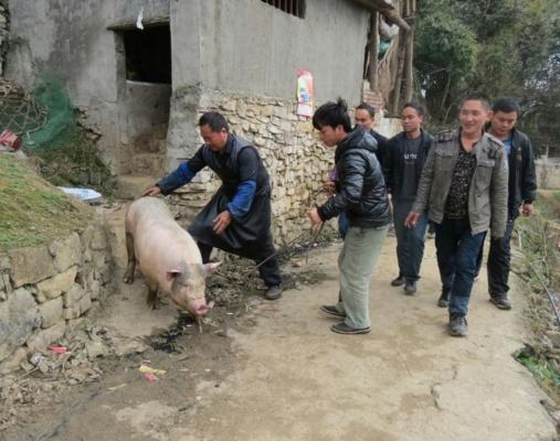 农村的屠夫经常被酒肉招待,日子过得不错,为何很少有长寿的?