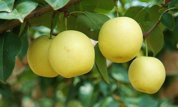 【健康】入秋以后常吃这几种水果有益身体健康
