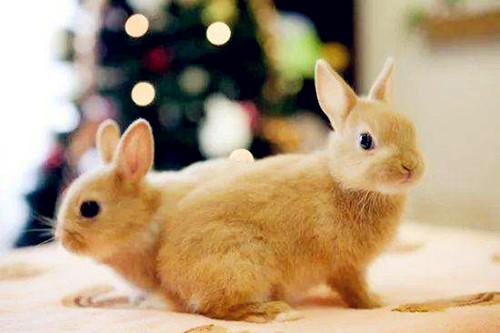 <b>【兔兔の饲养经验】兔子拉屎不成形很软,迷你兔拉屎不成形很软怎么办</b>