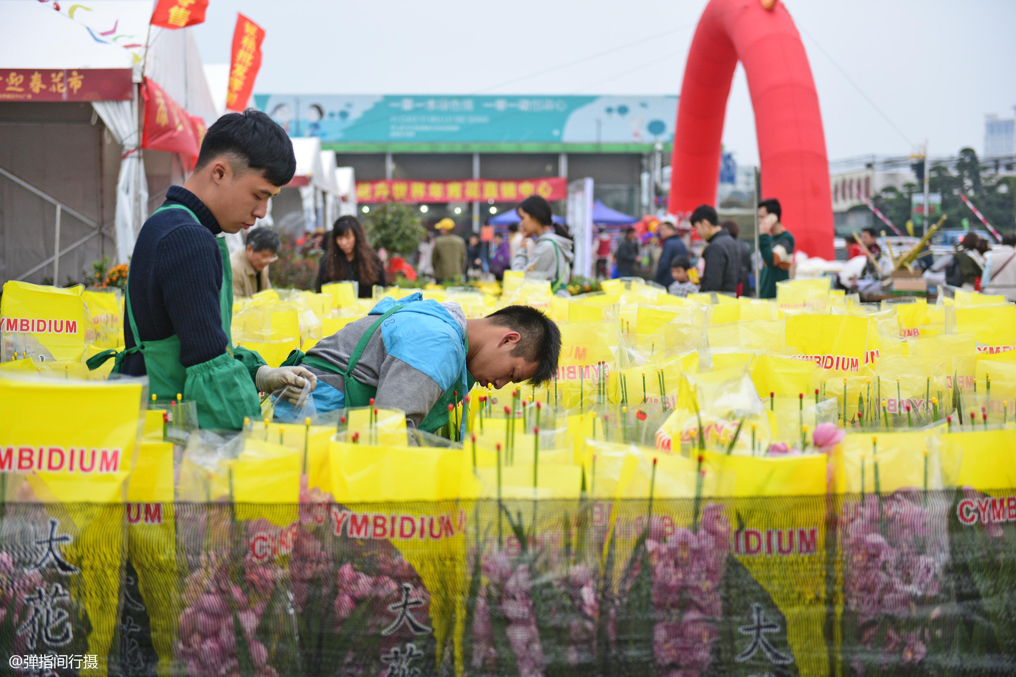 """<b>广东最美小镇全民种花,号称""""中国花卉第一镇"""",花卉产值达30亿</b>"""