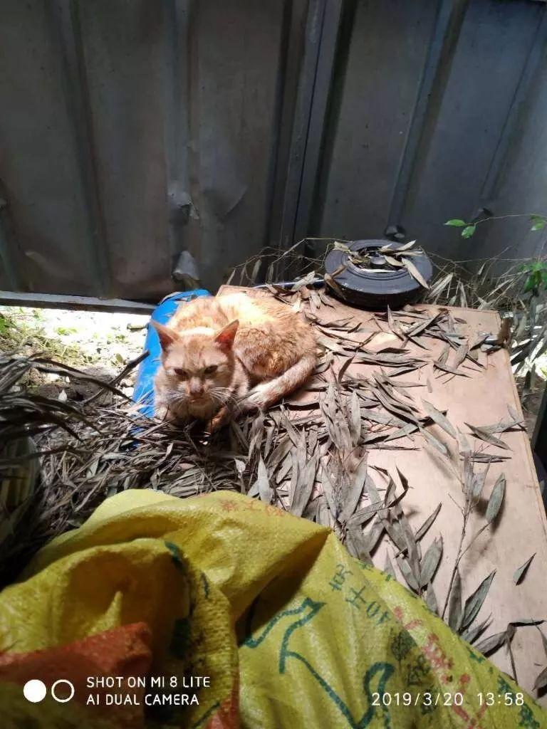 救助站紧急腾退 250只小动物搬新家--北京频道--人民网