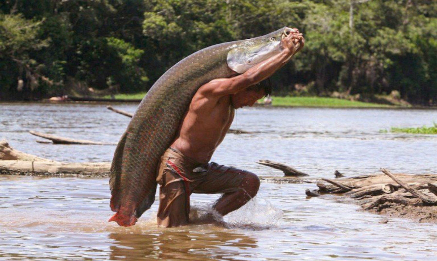 攻击力极强的巨鱼,却智商堪忧,蠢到国家设法保护后才得以幸存